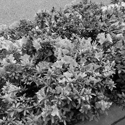 Street_flower