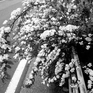 Street_flower2